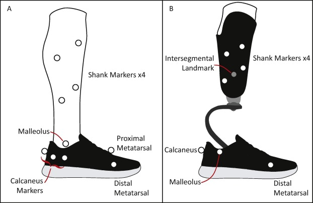 Fig2-AnkleFoot