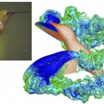 The Luo group uses computational fluid dynamics to understand the efficient propulsion and rapid maneuver techniques employed by animals in nature.