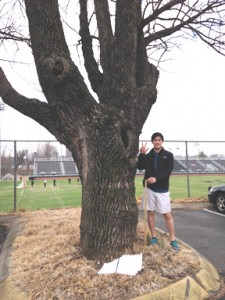 Student surveying ash trees