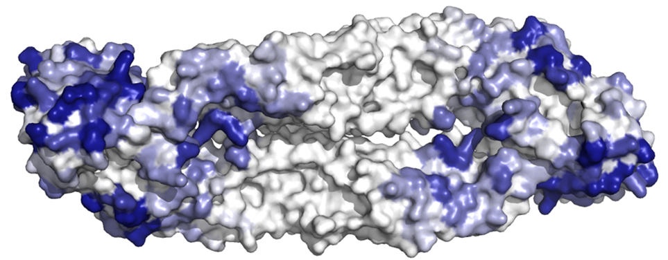 Dengue_Protein