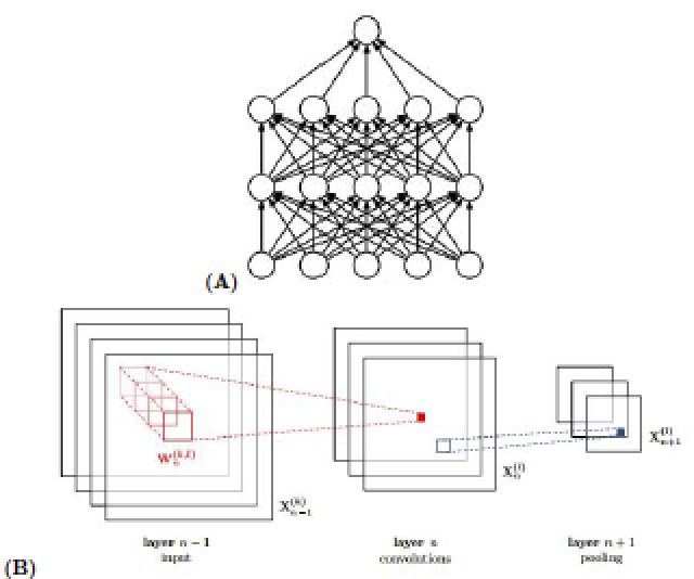 (A) A standard fully connected neural network where each layer's node is connected to each node from the previous layer.7 (B) A convolutional neural network connecting a covolutional layer to a pooling layer.