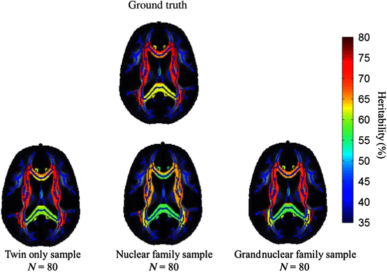 Results from the application analysis. Heritability estimates from the twin, nuclear, and grandnuclear families of 80 subjects overlayed on the ENIGMA-DTI fractional anisotropy template and skeleton. The color scale reflects the heritability estimate, with warmer colors suggesting greater heritability. The ground truth heritabilities were derived from the previous literature.