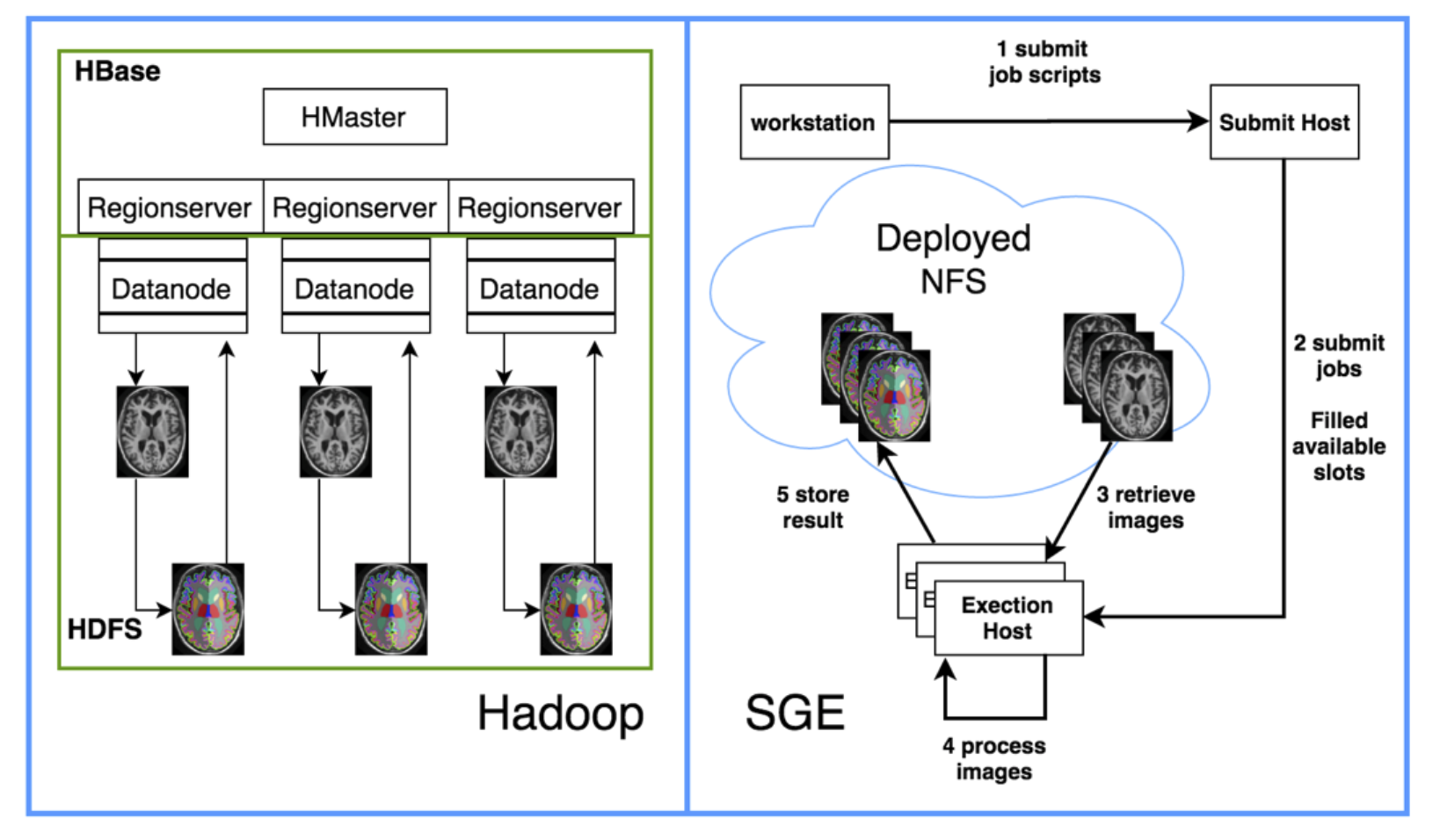 Hadoop and SGE data retrieval, processing and storage working flow basing on Multi-atlas CRUISE (MaCRUISE) segmentation [14, 15]. The data in an HBase table is approximately balanced to each Regionserver. The Regionserver collocates with a Hadoop Datanode to fully utilize the data collocation and locality[7]. We design our proposed computation models using only the map phase of Hadoop's MapReduce [13]. In this phase, the data is retrieved locally; if the result were moved to reduce phase, more data movement would occur, because the reduce phase does not ensure process local data. Within the map phase, all necessary data is retrieved and saved on a local directory and gets furtherly processed by locally installed binary executables command-line program. After that, the results of processing are uploaded back to HBase. For SGE, the user submits a batch of jobs to a submit host, and this host dispatches the job to execution hosts. Each execution host retrieves the data within a shared NFS and stores the result back to the NFS.