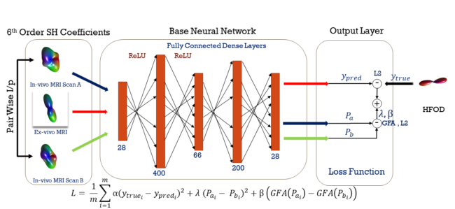 The base regression neural network is depicted in the center which describes the parameters of the fullyconnected dense layers with respective activation functions. The plot at left: Depicts three inputs where the center input comes from corresponding DW-MRI with histology. The other two are pairwise inputs from corresponding voxels of scanner 1.5T and 3T. The plot at right: Depicts the loss function which uses the hypothesis that the outcome/prediction should be same irrespective of the scanner gradient strength.