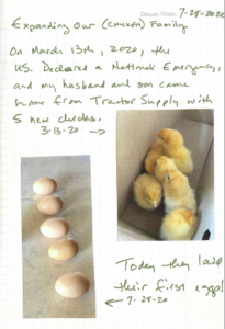 New chicks and then eggs
