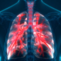 3D Illustration of Lungs