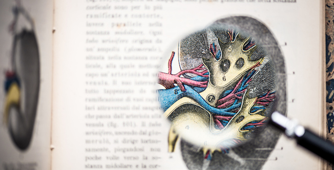 Magnifying glass on antique anatomy book: Kidney