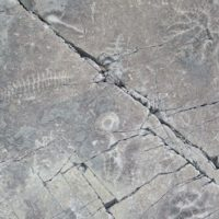 hand-sized squggly fossils embedded in concrete-like rock