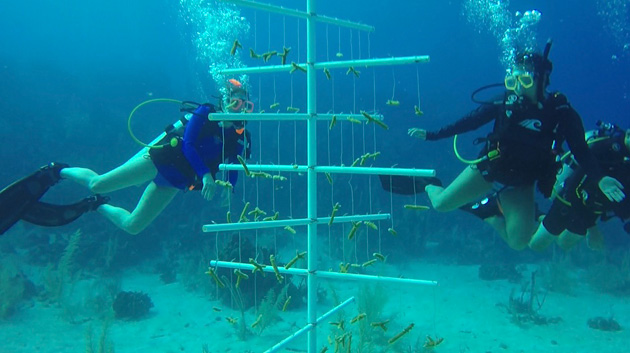 Students contributed their own money to help build a coral nursery using PVC pipe trees. (Vanderbilt University)