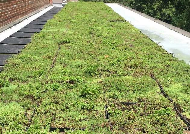 The green roof on the third floor of Rand, outside the wall of windows and across from the Anchor. (SEMO/Vanderbilt University)