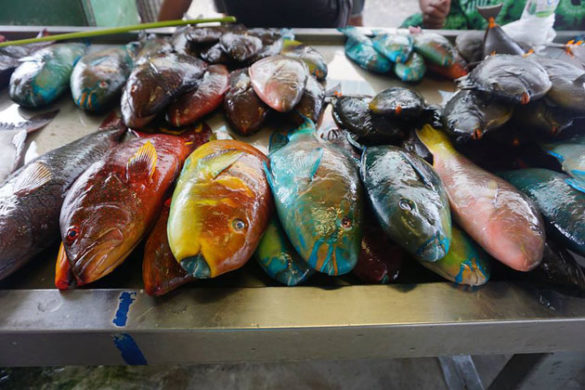 """""""Everything about Samoa is colorful, even the fish market"""" by Connie Tsai"""