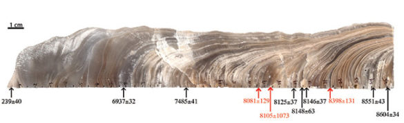 stalagmite with stratifications dated