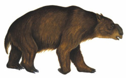 drawing of a giant bear-like creature