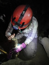 Jessica Oster working in White Mountain Cave. (Jessica Blois)