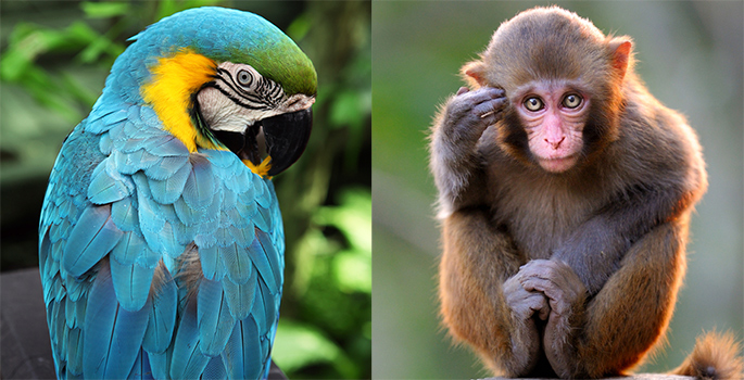 composite photo of a macaw and a macaque