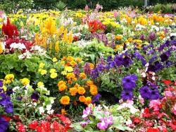 Learn Tips And Trends For Flower Gardening Feb 11 Vanderbilt