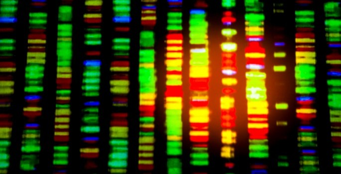 DNA sequence visualization