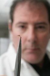 Zwiebel holding a mosquito with tweezers