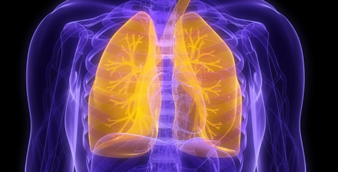 colorized xray of lungs