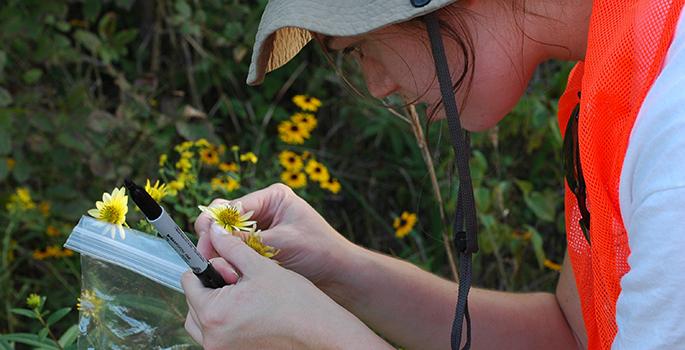 Jennifer inspecting a flower in the field