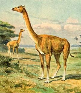 alticamelus