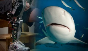 VUCast: Shark Attack to Bionic Breakthrough