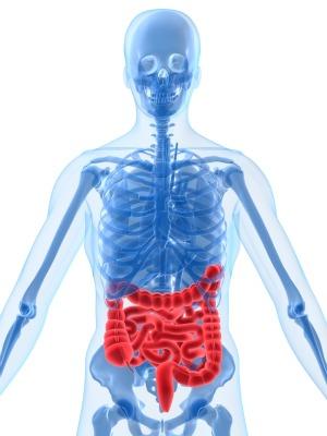Illustration of human intestinal tract