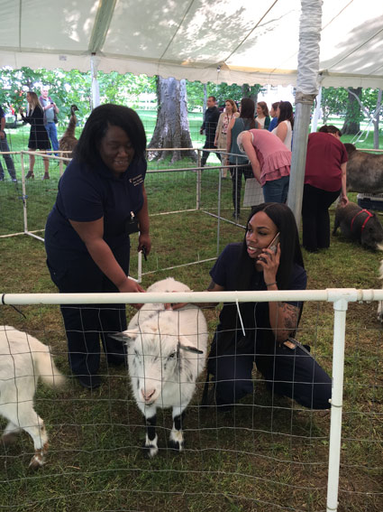 A petting zoo was among the popular attractions at this year's Employee Appreciation Picnic May 14. (Vanderbilt University)