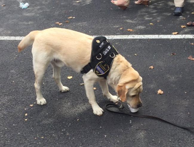 Vanderbilt University Public Safety K9 Officer Jack cools off with a treat at Vandy Chills. (Vanderbilt University)