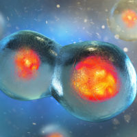 Cell embryo, Mitosis under microscope. 3D illustration