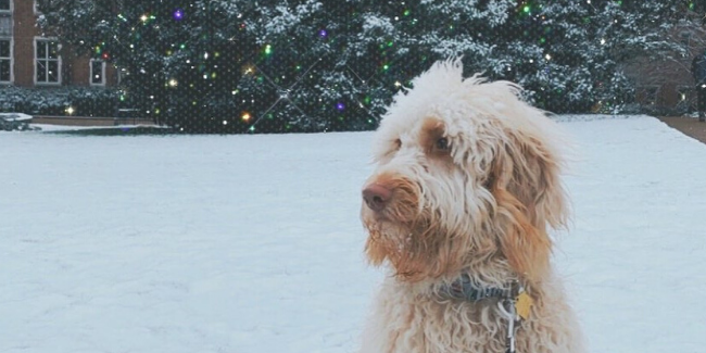 Our favorite #vandygram of the week