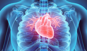 Discovery shows how to treat heart attacks; drug development underway