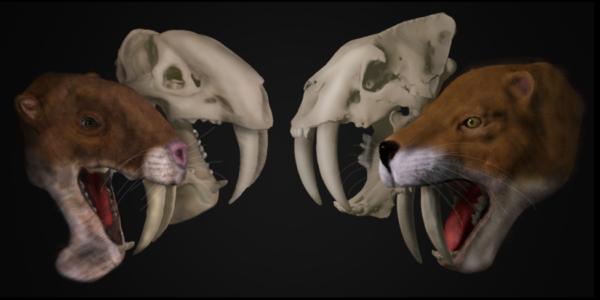 marsupial sabertooth Thylacosmilus atrox