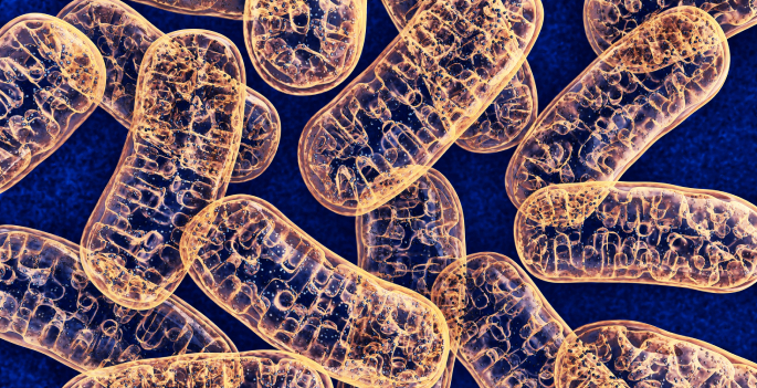 Vanderbilt biologists test evolutionary theories with novel empirical study of 'cheater' mitochondria