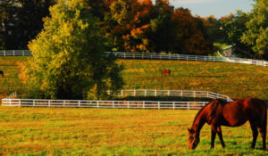 Vanderbilt researchers develop publicly available COVID-19 animal susceptibility prediction tool; suggests increased risk to horses