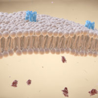 cell membrane lipid bi-layer with receptors