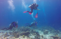Sirenas expedition members explore the ocean floor near Curacao, an island in the Caribbean