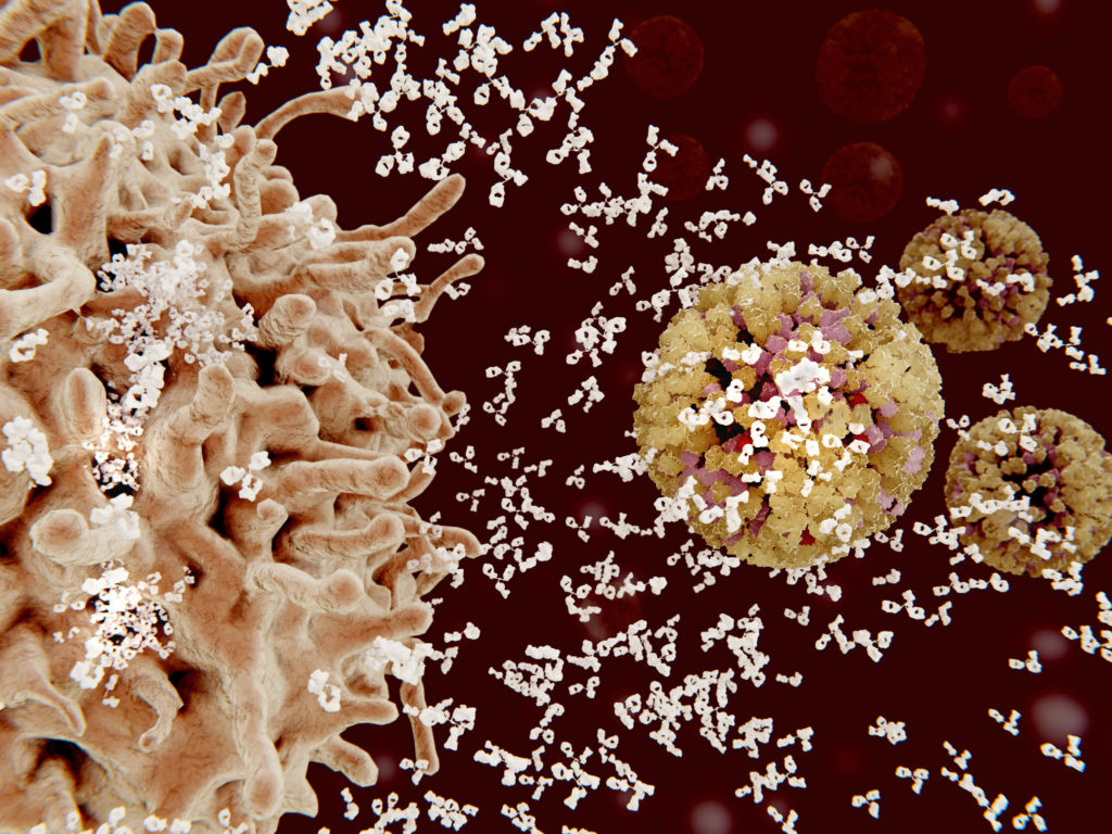 A plasma cell (left) secretes antibodies, shown in white, against an influenza virus. Antibodies bind to specific antigens, such as viral proteins, marking them for destruction. (JUAN GAERTNER/SCIENCE PHOTO LIBRARY)