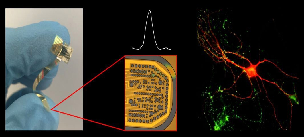 Graphene probes for electrical activity in brain and retina