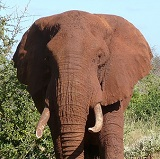 WIPER elephant anti-poaching