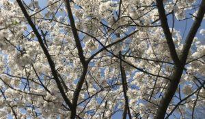Spring Semester Look-Ahead