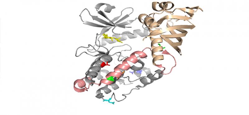 CaMKII Subunit Structure