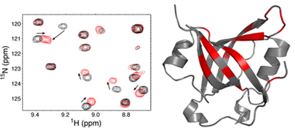 A protein interacting surface on RPA revealed by NMR spectroscopy