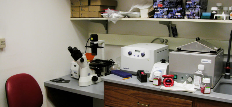 Cell culture room adjacent to the main lab area.