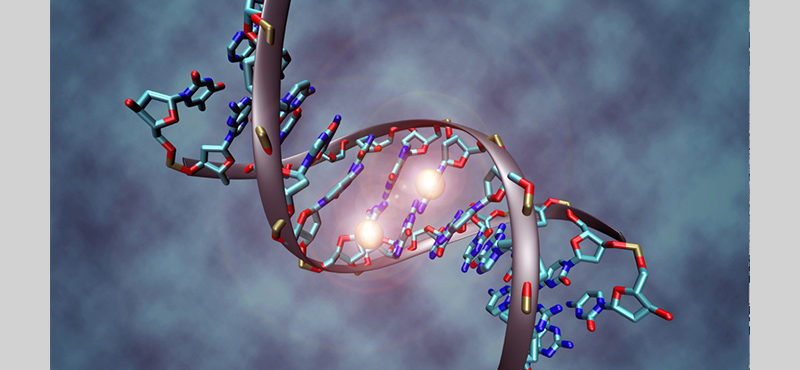 DNA methylation and non-coding gene regulatory variation in evolution, development and disease