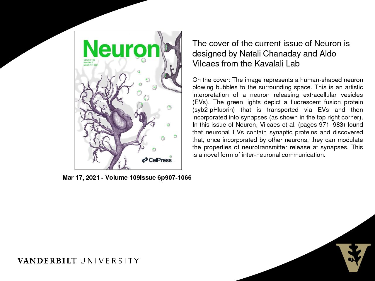 Cover of Neuron Designed by Natali Chanaday and Aldo Vilcaes from Kavalali Lab