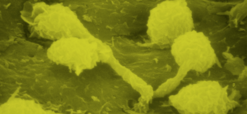 Molecular Pathology & Immunology