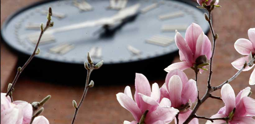 A photo of blooming flowers and a clock on a campus building
