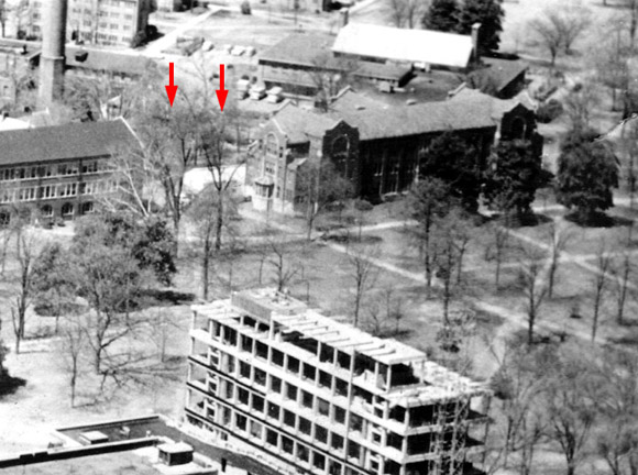 Trees at location of Stevenson Courtyard, 1961