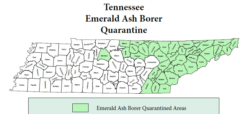 Emerald Ash Borer in TN